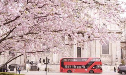 樱花季 | 伦敦樱花开了!全城彩蛋惊现,唤醒了最浪漫的春天!